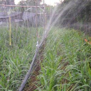 微喷带灌溉技术