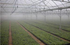 微喷技术在农业设施中的应用