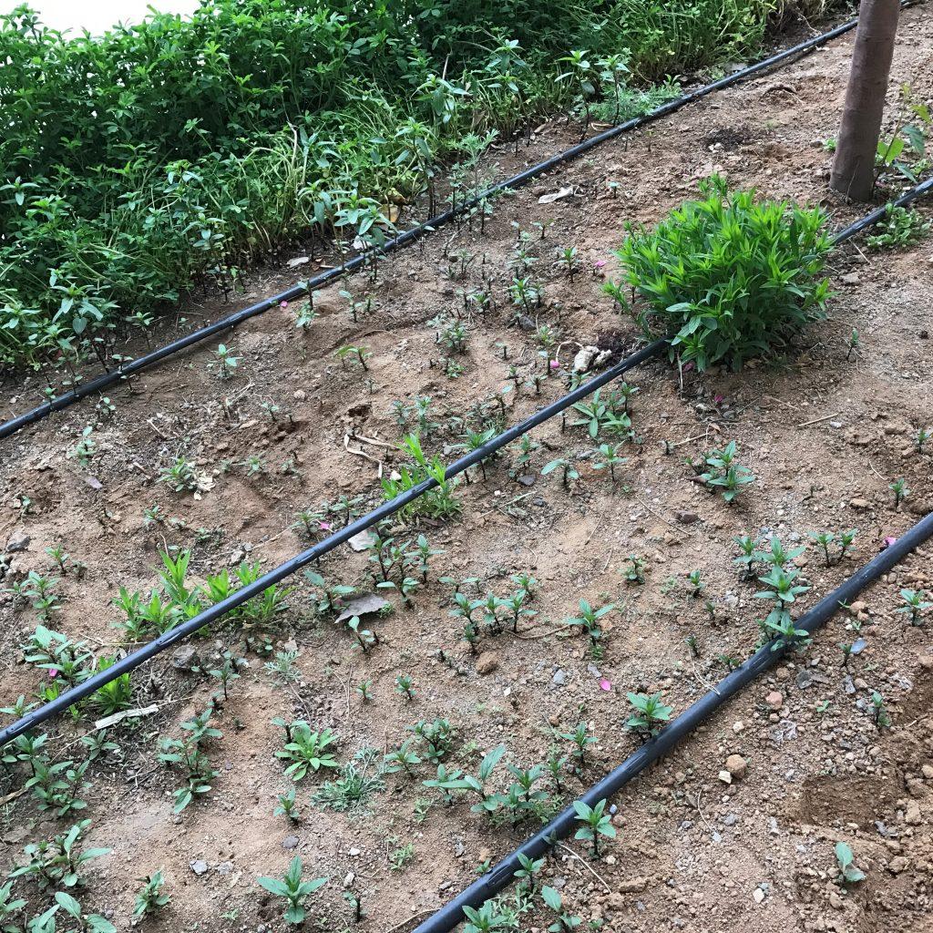 园林喷灌、滴灌、微喷