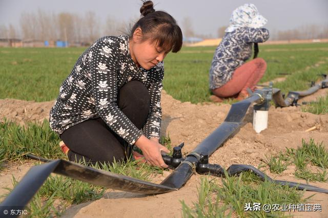 水肥一体化(滴灌)详细全解!为什么滴灌可以省肥30—50%?