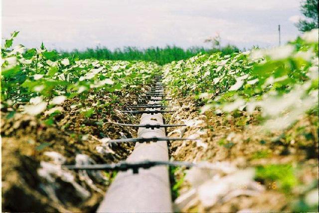 哪些灌溉方式是节水灌溉,你真的了解吗?
