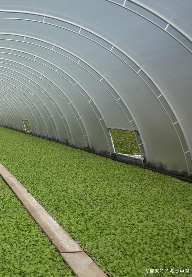 喷灌技术、滴灌技术、微喷技术、小管出流技术——节水灌溉的几种灌溉技术