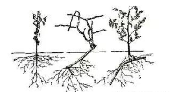 水肥一体化施肥技术中,哪些肥料不能混配?