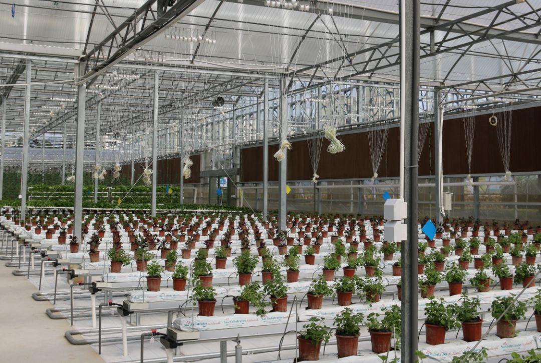水肥一体化智能灌溉使用注意事项