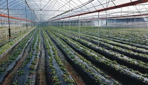 蔬菜高效水肥一体化灌溉技术的实践与发展建议