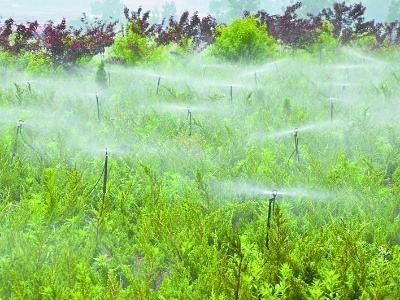 节水灌溉对农业可持续发展的影响